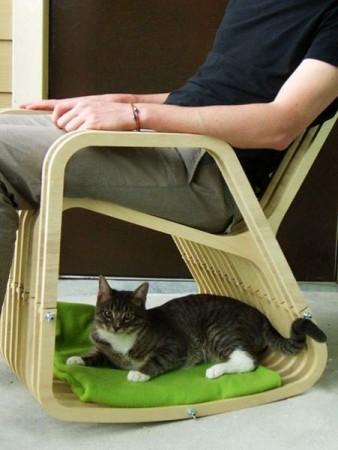 صور قطط كيوت (2)