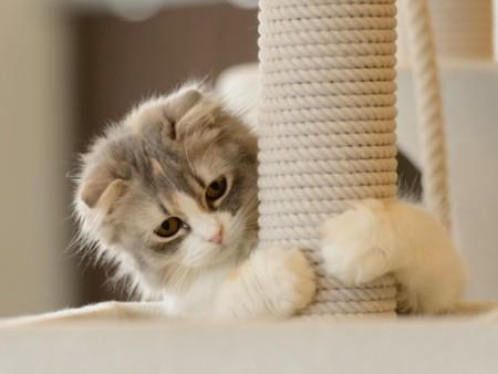صور قطط (1)