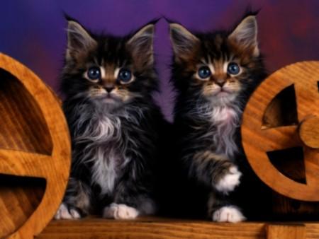 صور قطط (3)