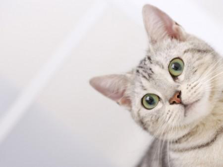 صور قطط (6)