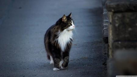 صور قطط HD (3)