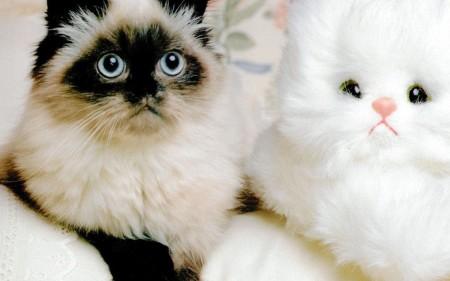 صور قطط HD (4)