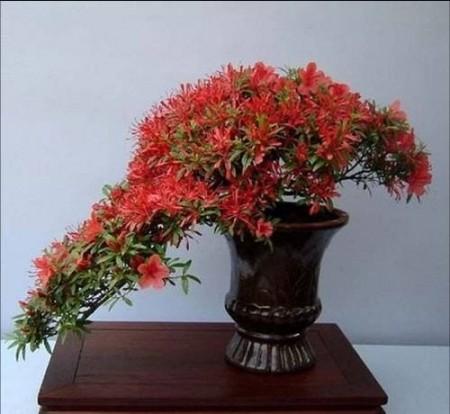 صور ورد احمر (4)