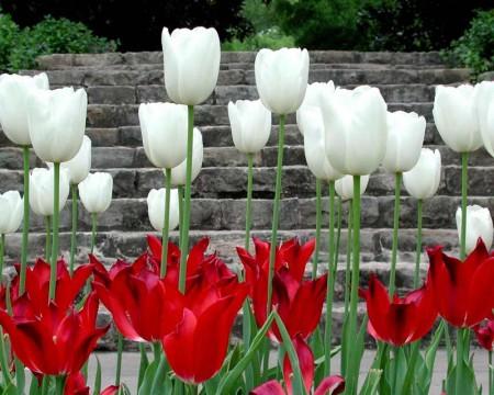 صور ورود جميلة وزهور جذابة (3)
