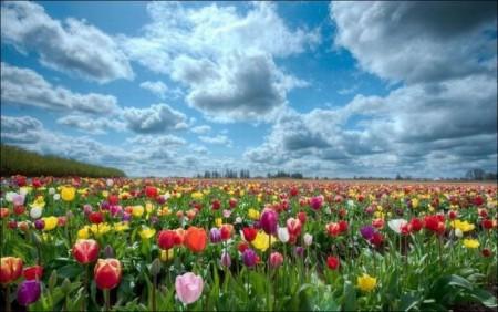 صور ورود جميلة وزهور جذابة (4)