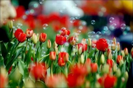 صور ورود جميلة وزهور جذابة (6)