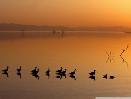 طيور بالصور (1)