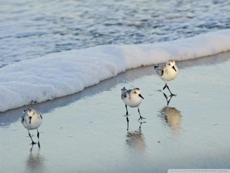 طيور بالصور (3)