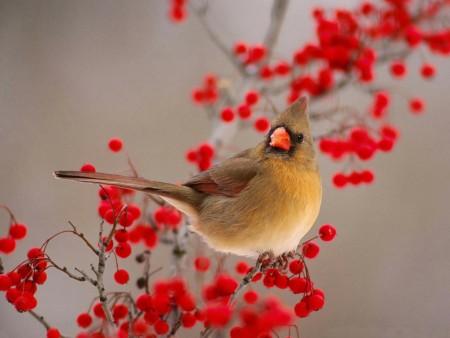 طيور بالصور (5)