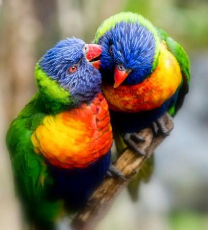 طيور بالصور (6)