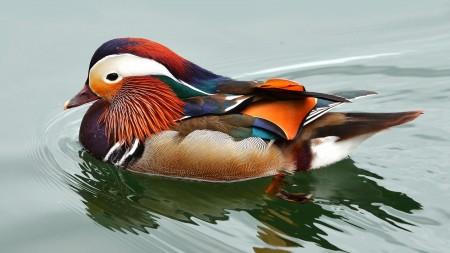 طيور بالصور (8)