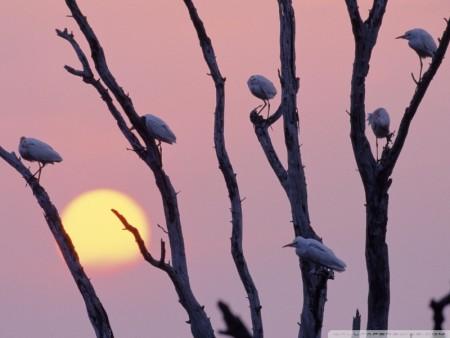 طيور جذابة (3)