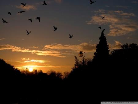 طيور جذابة (5)