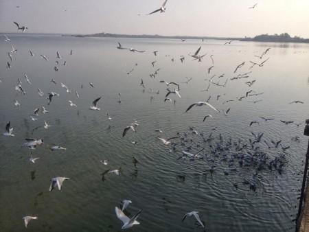 طيور جميلة جدا (2)