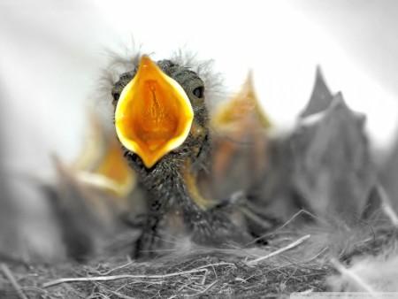 طيور جميلة جدا (5)