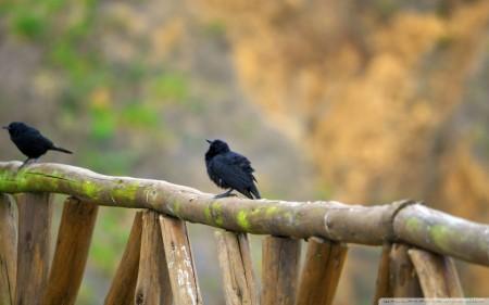طيور خلفيات جميلة (2)