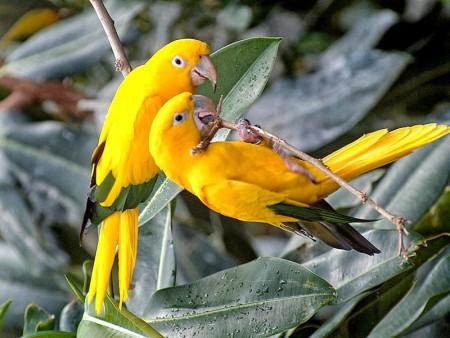 طيور ملونة (1)