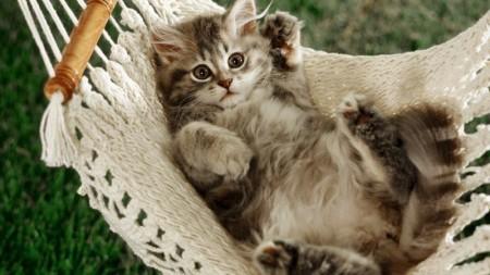 قطط جميلة (2)