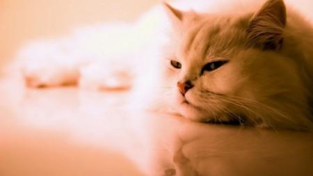 قطط جميلة (8)