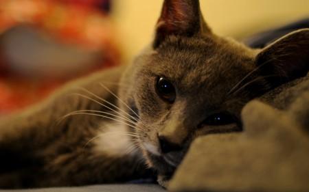 قطط (3)