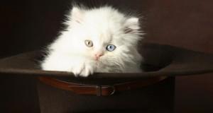 قطط (4)
