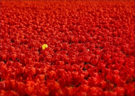 ورد احمر جميل (4)