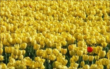 ورد اصفر (3)