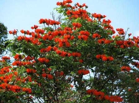 ورد جميل احمر (1)