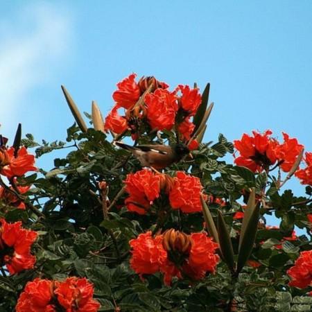 ورد جميل احمر (3)