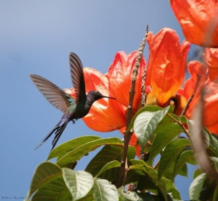 ورد جميل بالصور احلي خلفيات الورود والزهور (3)
