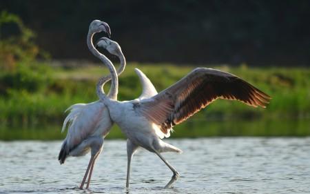 اجمل صور حيوانات (2)