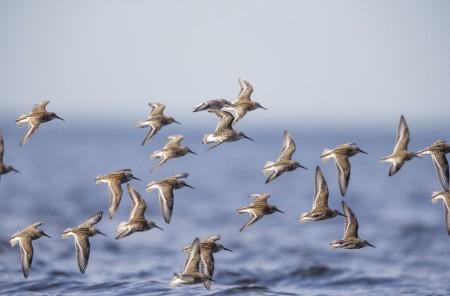 اجمل صور طيور (1)