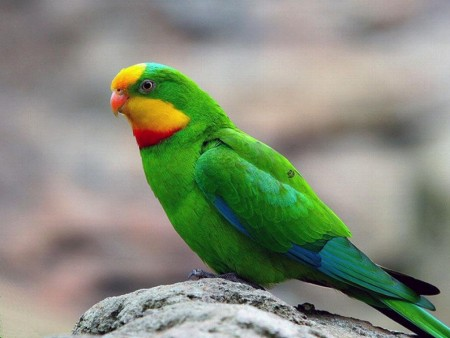 اجمل صور طيور (3)