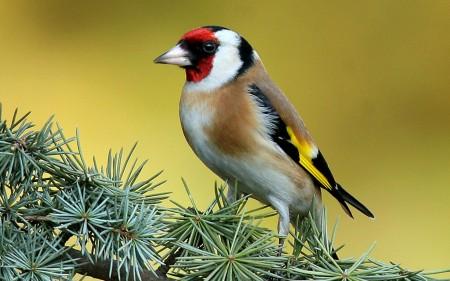 اجمل صور وخلفيات طيور HD (2)