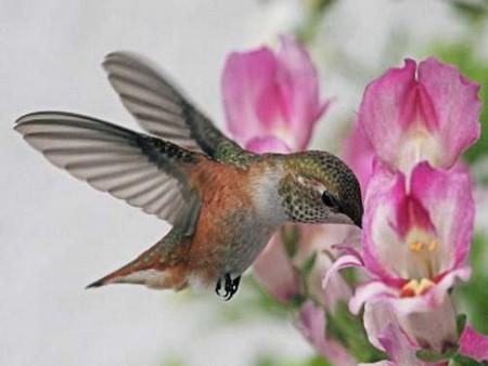 اجمل طيور الزينة (1)