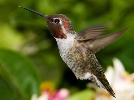 اجمل طيور في العالم (1)