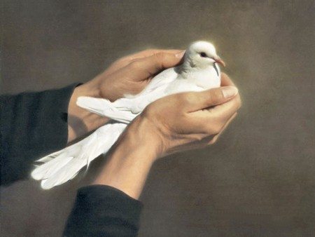 اجمل طيور في العالم (2)