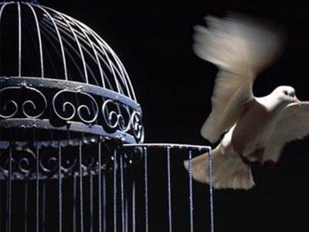 اجمل طيور في العالم (3)