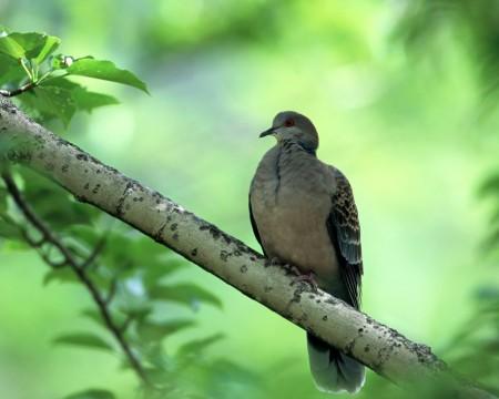 اجمل طيور (2)