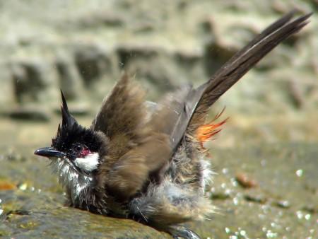 احلي صور طيور (5)