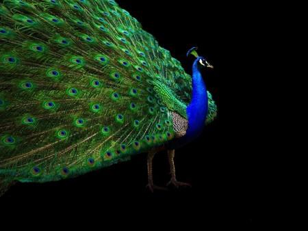 احلي عصافير (2)