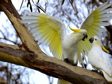 احلي عصافير (3)