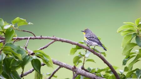 اشكال الطيور (1)