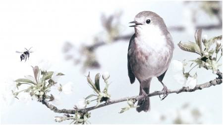 اشكال الطيور (2)