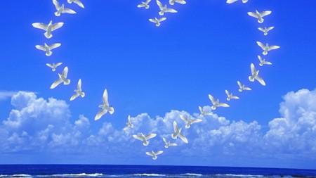 اشكال الطيور (4)