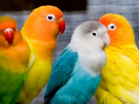 اشكال العصافير (4)