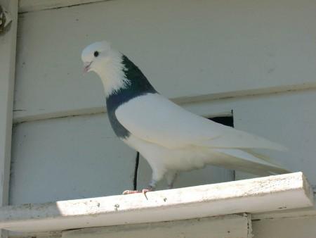 اشكال وانواع الطيور (1)
