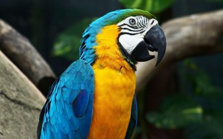 الوان العصافير (4)