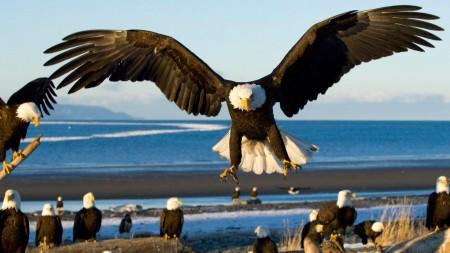 انواع الطيور (2)