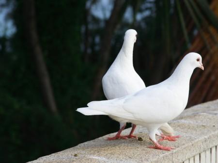 انواع الطيور (5)